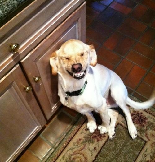 cani che sorridono12