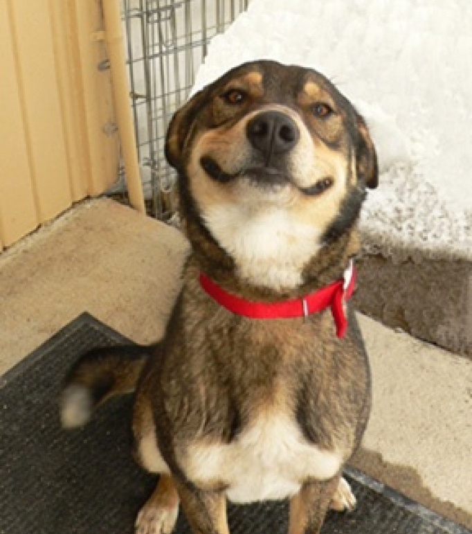 cani che sorridono16