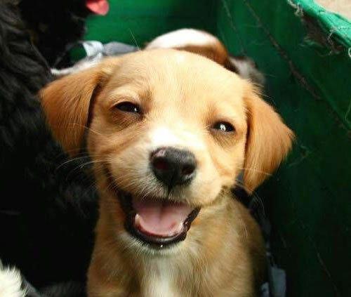cani che sorridono17