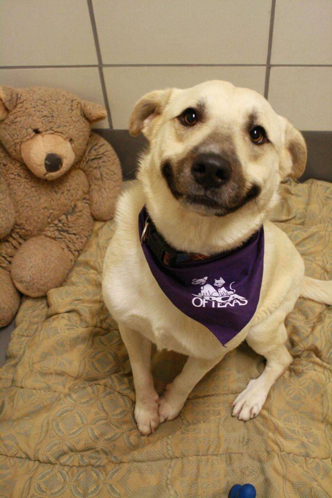 cani che sorridono18