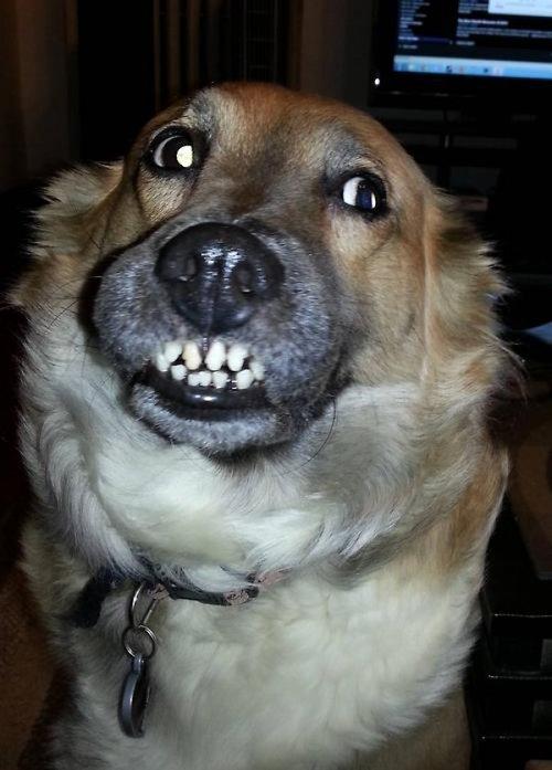 cani che sorridono3