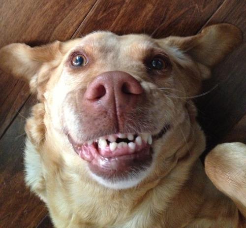 cani che sorridono4