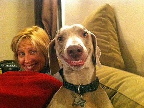 cani che sorridono5