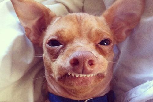cani che sorridono6
