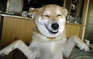 cani che sorridono7