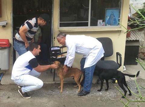 consigliere brasiliano salva animali per strada