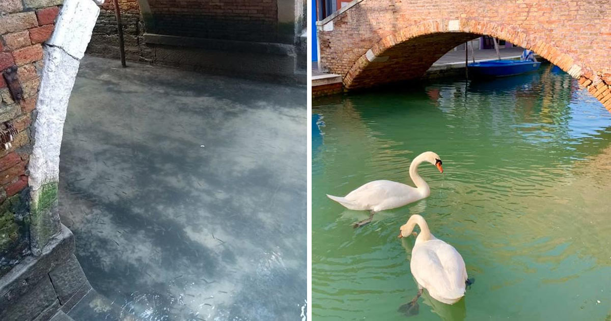 acque-venezia-tornano-limpide