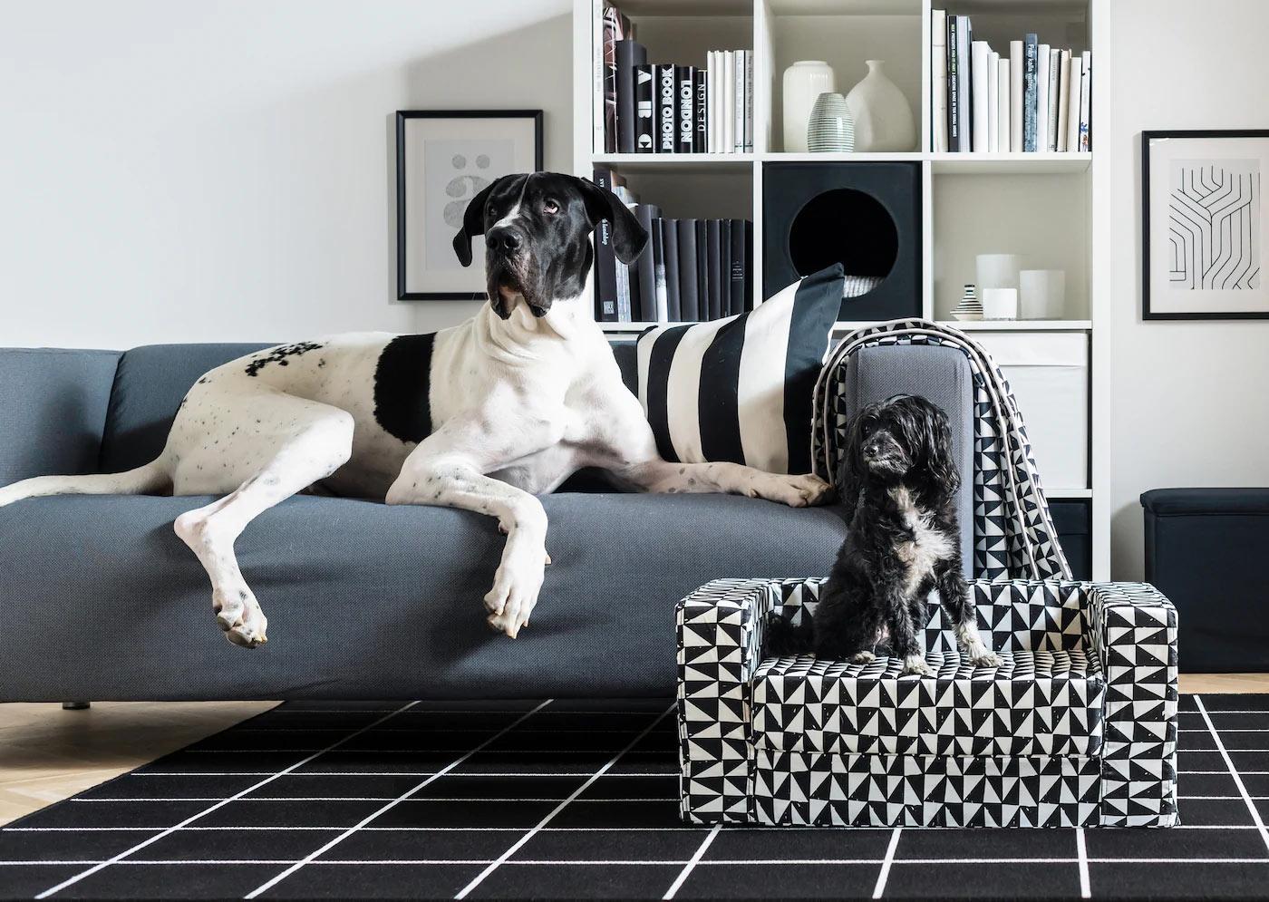 Cucce Design Per Cani cucce per cani ikea | cucce originali e design per il tuo cane