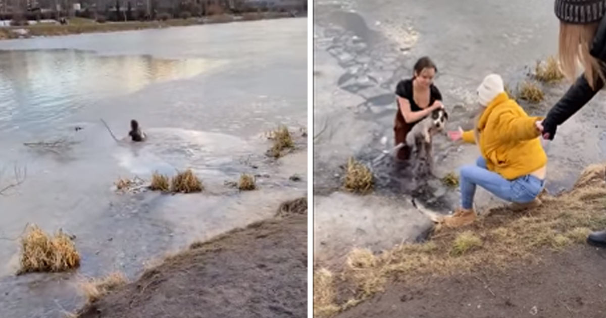donna-salva-cane-in-lago-ghiacciato