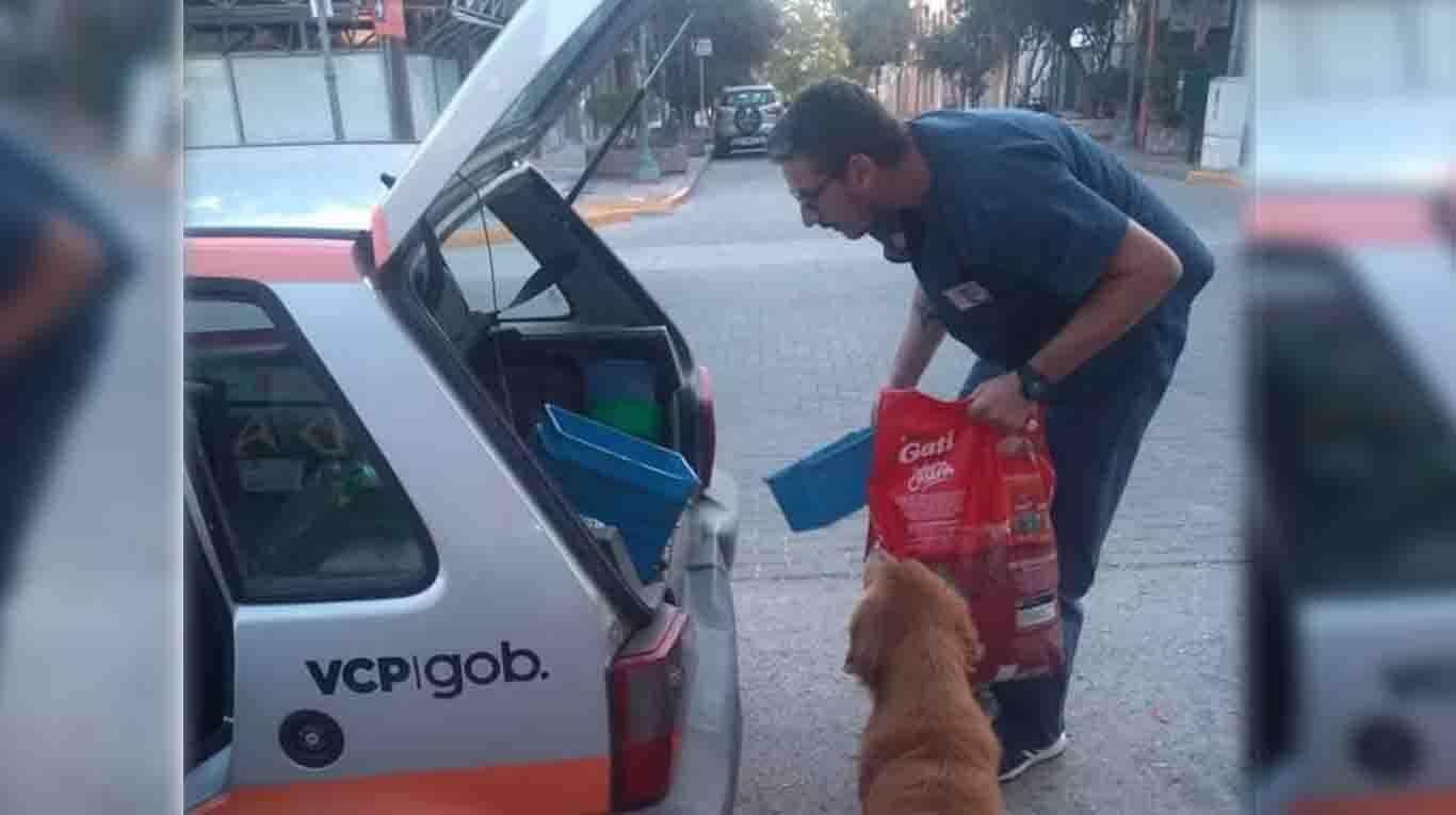 comune dà cibo ai cani randagi