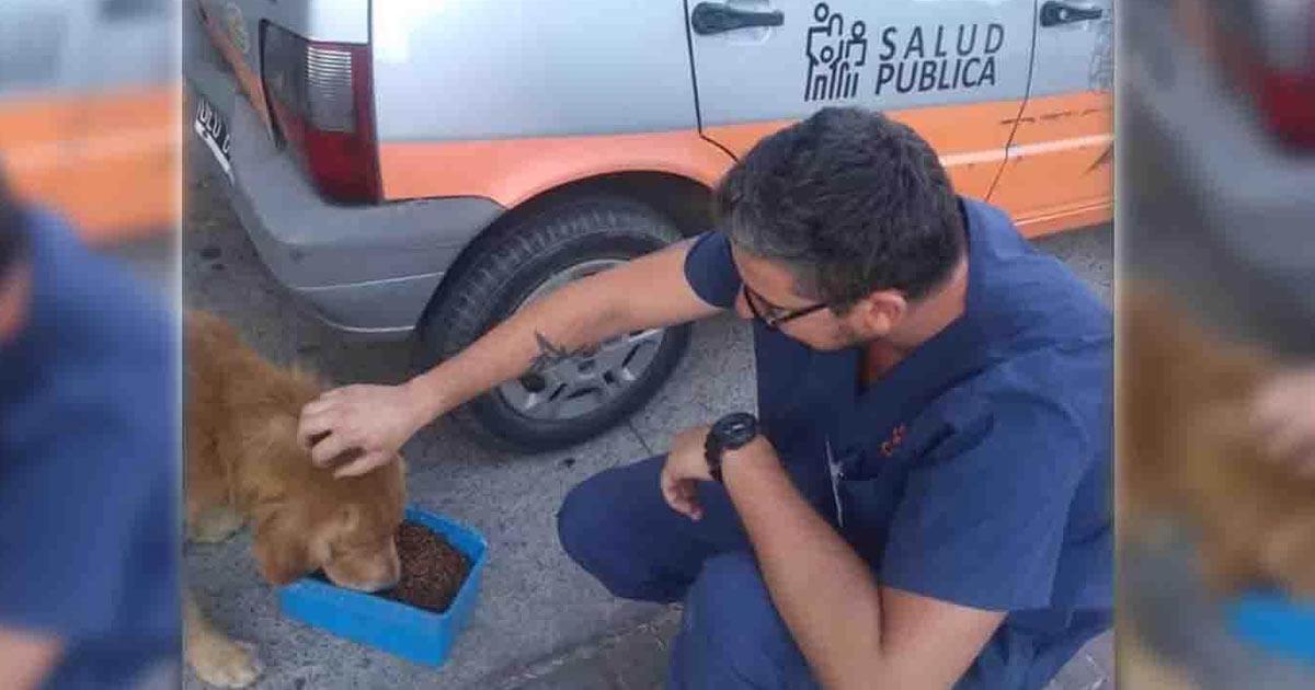 comune-distribuisce-cibo-ai-cani-randagi