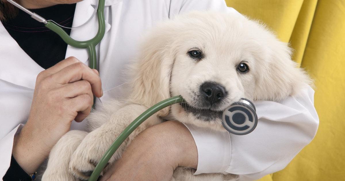 crisi-epilettiche-cane