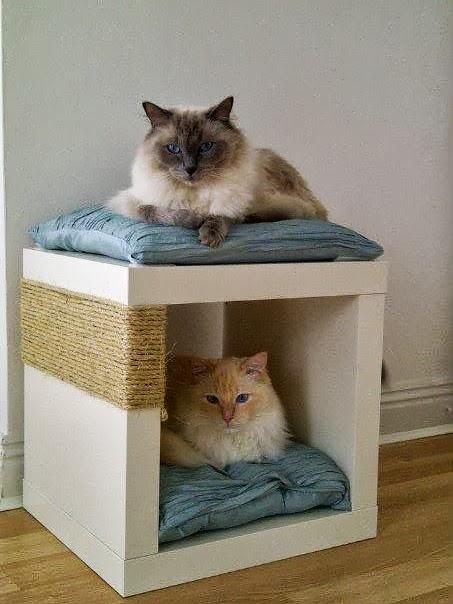 cucce per gatti fai da te2
