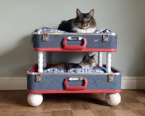 cucce per gatti fai da te6