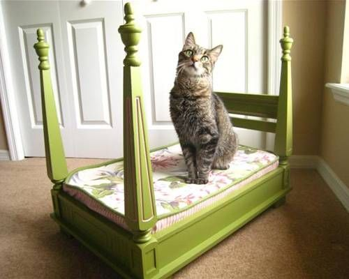 cucce per gatti fai da te7